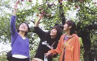 種沢観光りんご園